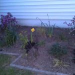 front-flower-bed-cleanup-camden-county-nj