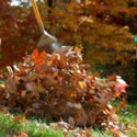 Leaf & Brush Debris Cleanup