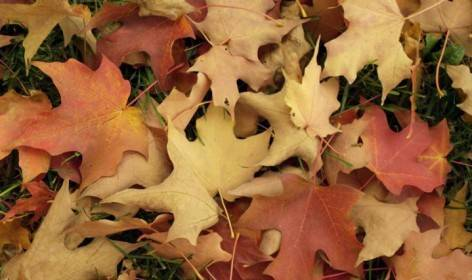 NJ-Fall-Leaf-Cleanup