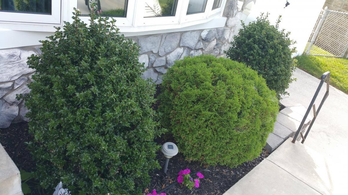 nj-bush-hedging-service