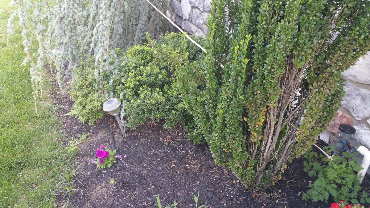 nj-yard-flowerbeds-weeded