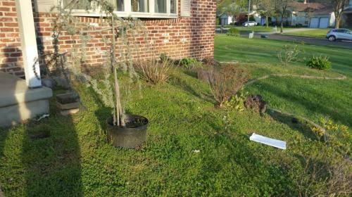 blackwood-new-flowerbed-before